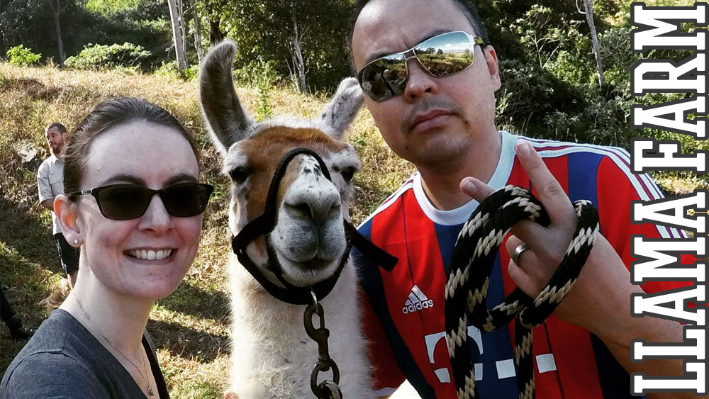 In September we visited a llama farm. They are fantastic creatures with a lovely temperament.
