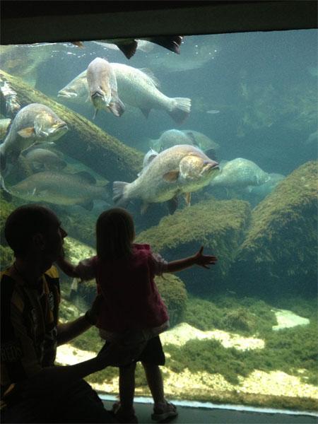 abbyfish
