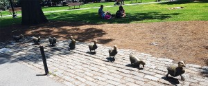 walkingducklings